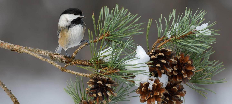Lets_Go_Birding_Hero