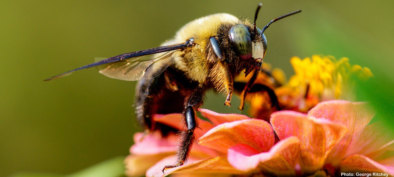 green-hour-pollination-hero