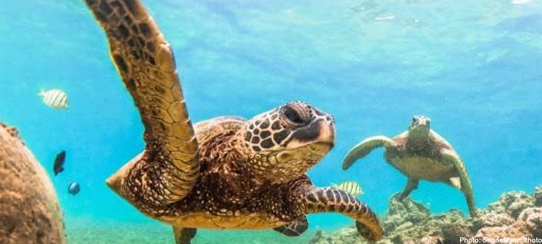 green-hour-celebrate-oceans